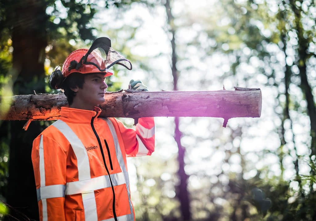 training begeleidingssnoei straat- en laanbomen